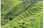 Abenteuer, Malaysia, Teefeld