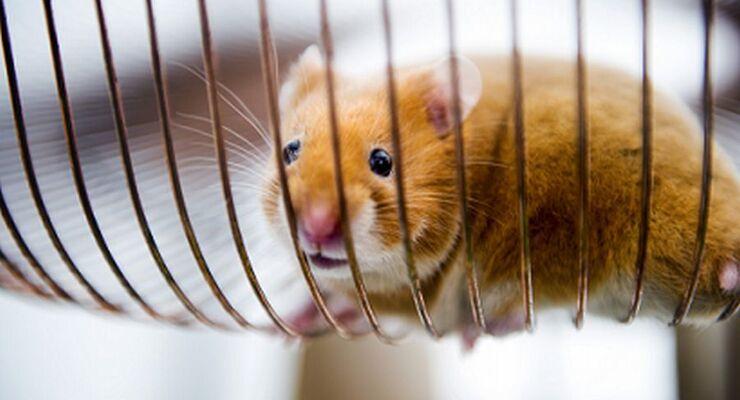 Volvo, Hamster Hamsterrad